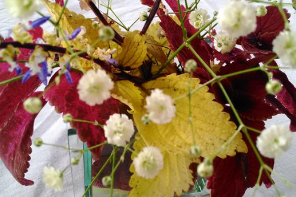 Flower201611