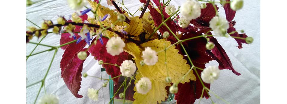 2016年11月 花を育てる